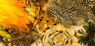 Mixture of feathers Royalty Free Stock Image