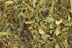 A mixture of herbs Royalty Free Stock Image
