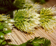 A mixture of herbs Royalty Free Stock Photography