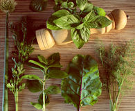 A mixture of herbs Stock Image