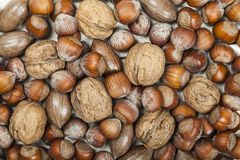 Mixture of nuts Stock Photography