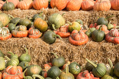 Mixture of Pumpkin and Squash in a Pumpkin Patch in Northern California Royalty Free Stock Photo