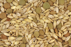 Mixture of raw grains background Royalty Free Stock Photography