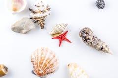 Mixture of shells Stock Photos