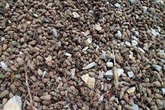 Mixture of tree cones Royalty Free Stock Photo