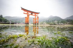 Miyajima, Floating Torii gate, low tide, Japan. Royalty Free Stock Photo
