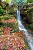 Miyajima, Hiroshima, parc de Momijidani Image stock
