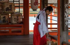 Shrine maiden remove the japanese Omikuji or sacred lottery  in Itsukushima Shrine. Is a Shinto shrine on the island of royalty free stock photo