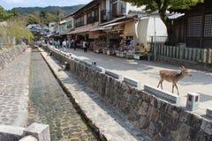 Miyajima - Japan Royalty Free Stock Images