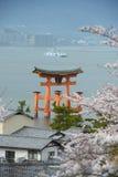 miyajima sakura Royalty Free Stock Photos