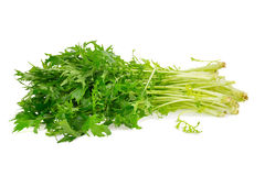 Mizuna greens on white background Stock Images