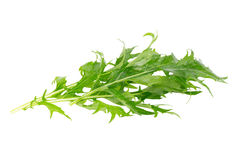 Mizuna greens on white background Stock Image