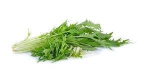 Mizuna, Japanese water vegetable or potherb mustard on white bac. Mizuna, Japanese water vegetable or potherb mustard on a white background Royalty Free Stock Photos