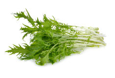 Mizuna, Japanese water vegetable or potherb mustard on white. Background Royalty Free Stock Photos