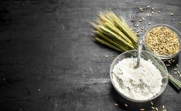 Mjöl med spikelets och vete Royaltyfri Fotografi