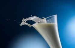 mjölka Arkivfoto