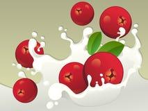 Mjölka färgstänk med tranbär. Arkivfoton