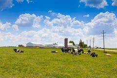 Mjölka lantgården Arkivfoto