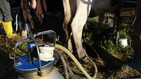 Mjölka maskinpumpen mjölka lager videofilmer