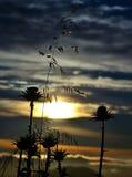 Mjölka tistlar och havre på soluppgång Royaltyfria Foton