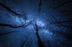 Mjölkaktig väg i skogen på den stjärnklara natten arkivbild