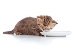 mjölkar den brittiska kattungevarven för bunken skott Arkivbild