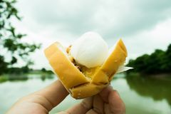 Mjölkar den hållande kokosnöten för handen glass med bröd Fotografering för Bildbyråer