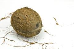 Mjölkar den skräp- nya tropiska bruna vita organiska kokosnöten för kokosnöten på trävit bakgrund Royaltyfri Fotografi