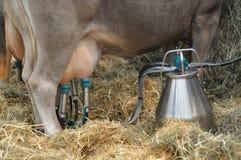mjölka för maskin Royaltyfria Bilder