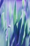 Mjuk bakgrund för grönt gräs för fokus Äng för grönt gräs i solig morgon Arkivbild