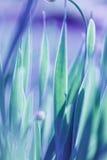 Mjuk bakgrund för grönt gräs för fokus Äng för grönt gräs i solig morgon Royaltyfri Fotografi