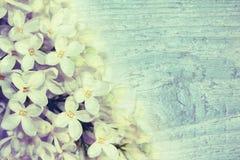 Mjuk bakgrund med lilor Royaltyfria Foton