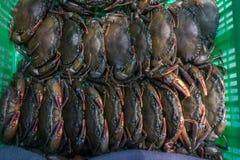 Mjuk-besköt krabbor i grön korg Arkivfoton