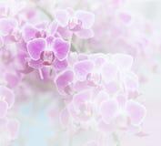 Mjuk färg för rosa orkidé och suddighetsstil Arkivfoton