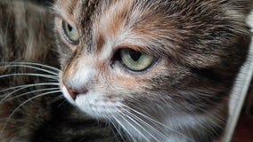 Mjuk fluffig röd strimmig kattkatt royaltyfri foto