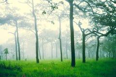 Mjuk fokus av den dimmiga skogen efter regn, abstrakt naturbackgroun Royaltyfria Bilder