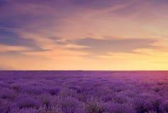 Mjuk fokus av lavendelfältet på den färgrika solnedgången i en varm su Royaltyfri Fotografi