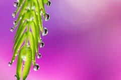 Mjuk fokus av små droppar på det gröna bladet med söt suddig rosa färgbac Royaltyfria Foton