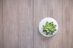 Mjuk fokus på den konstgjorda växten Fotografering för Bildbyråer