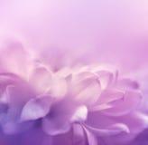 Mjuk fokusblommabakgrund Gjort med lensbaby Royaltyfri Bild