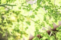 Mjuk grön bladbokehbakgrund Arkivfoton