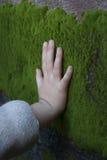 Mjuk grön mossa Fotografering för Bildbyråer