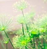 Mjuk grön naturabstrakt begreppbakgrund arkivfoto