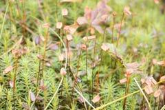 Mjuk grön vegetation i skogmossakolonierna Arkivfoton