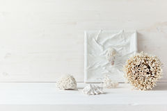 Mjuk hem- dekor; skal och koraller på vit träbakgrund arkivbild