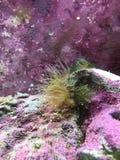 Mjuk korall Arkivfoto