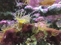 Mjuk korall Arkivbilder