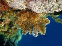 Mjuk korall Royaltyfri Foto