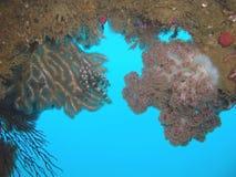 Mjuk korall Royaltyfria Bilder