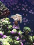Mjuk korall Arkivfoton